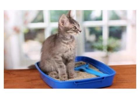 Производство - наполнители для кошачьего туалета